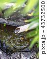 つくばい 水 竹の写真 43732500