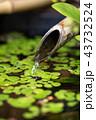 つくばい 水 竹の写真 43732524