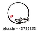 筆文字 魚 鰰のイラスト 43732863