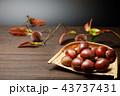 食品 栗 秋の収穫 43737431