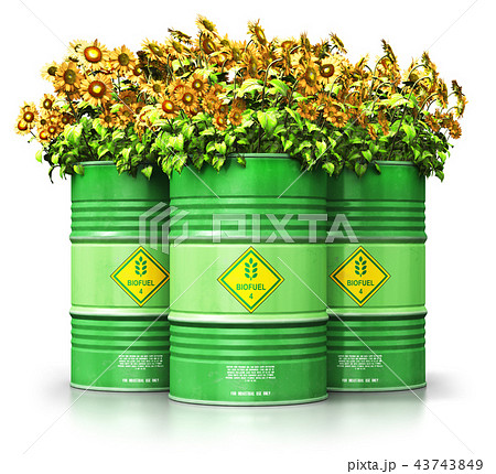 Green biofuel drums with sunflowers isolated white 43743849