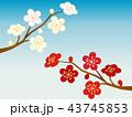 梅 花 梅の花のイラスト 43745853