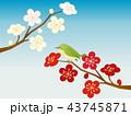 梅 梅の花 ベクターのイラスト 43745871