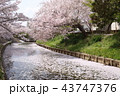 奈良 佐保川の桜 43747376