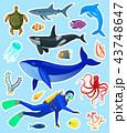 動物 貼り紙 シールのイラスト 43748647