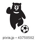 くま クマ 熊のイラスト 43750502
