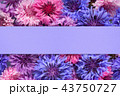 Background with cornflowers and blank violet paper 43750727