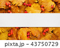 Layout with autumn leaves and berries 43750729
