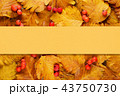 Background with autumn leaves and berries 43750730