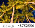 《ハワイ》ワイキキビーチのヤシの木・夜景 43752550