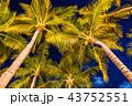 《ハワイ》ワイキキビーチのヤシの木・夜景 43752551