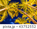 《ハワイ》ワイキキビーチのヤシの木・夜景 43752552