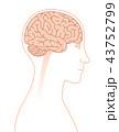 脳 大脳 横顔のイラスト 43752799