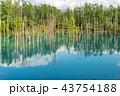 青い池 池 美瑛の写真 43754188