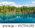 青い池 池 美瑛の写真 43754190