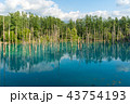 青い池 池 美瑛の写真 43754193