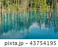青い池 水没林 池の写真 43754195