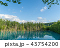 青い池 池 美瑛の写真 43754200