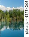 青い池 水没林 池の写真 43754206
