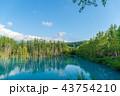 青い池 池 美瑛の写真 43754210