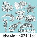 アクアリウム 水族園 水族館のイラスト 43754344
