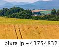 畑 麦畑 麦の写真 43754832