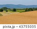 畑 麦畑 丘の写真 43755035