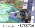 旭山動物園 アザラシ 43755739