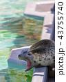 旭山動物園 アザラシ 43755740