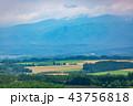美瑛の風景 夏 43756818