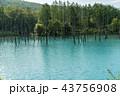 青い池 美瑛 夏 43756908