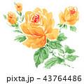 roseyellow18915pix7 43764486