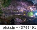 夜桜 井の頭恩賜公園 春の写真 43766491
