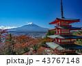 紅葉 秋 富士山の写真 43767148