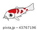 魚 鯉 錦鯉のイラスト 43767196