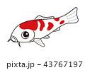 魚 鯉 錦鯉のイラスト 43767197