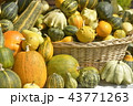 かぼちゃ各種 43771263
