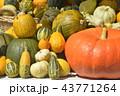 かぼちゃ各種 43771264