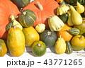 かぼちゃ各種 43771265