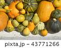 かぼちゃ各種 43771266