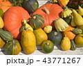かぼちゃ各種 43771267