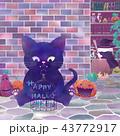 ハロウィン 黒猫 魔女のイラスト 43772917