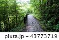 中仙道石畳 43773719