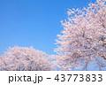 桜並木 43773833