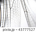 Dragonfly wing close up background with zoomed transparent lattice 43777527