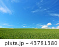 晴れ 北海道 畑の写真 43781380