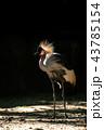 鶴 鳥 カラフルの写真 43785154