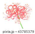higanbana18916pix7 43785379