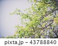 branch of green leaf (vintage tone) 43788840