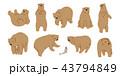 くま クマ 熊のイラスト 43794849